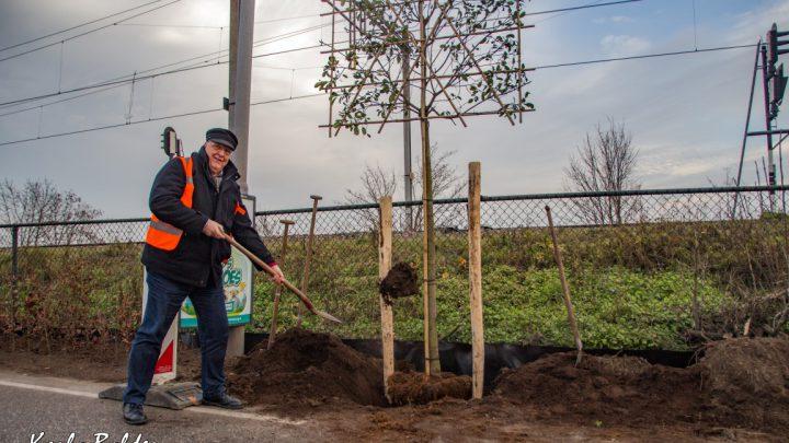 Eerste boom langs de Brugweg geplant