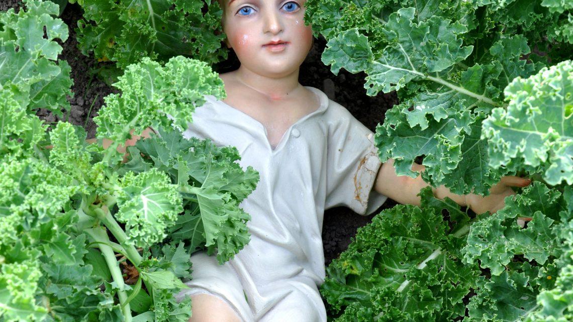BoerenKoolBoek (BKB) EtensAardigheden over boerenkool van Humphrey Ottenhof.